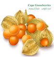 cape gooseberries realistic isolated on vector image