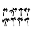 Palm tree black set vector image