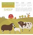 sheep farming infographic template ram ewe lamb vector image