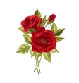Beautiful bouquet of roses isolated on white vector image
