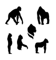 Gorilla monkey silhouettes vector image