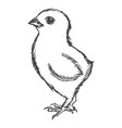 little cute chicken vector image