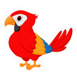 macaw bird cartoon vector image