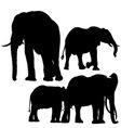 Elephants Silhouettes vector image