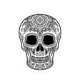 sugar skull with floral ornament dia de muertos vector image