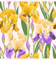 floral pattern with iris flowers vector image