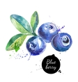 Hand drawn watercolor painting blueberry on white vector image