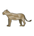 female lion african animal courageous creature vector image