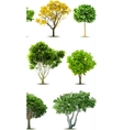 Set of trees isolated vector image