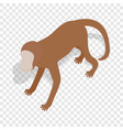 Monkey isometric icon vector image