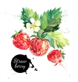 Hand drawn watercolor painting strawberry on white vector image vector image