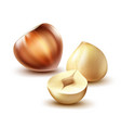 whole and cut hazelnuts vector image