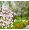 spring background with sakura vector image