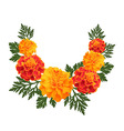marigolds on white background vector image