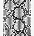 skin of snake vector image