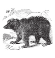Asian bear vintage engraving vector image vector image