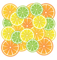 Various Citrus Slices3 vector image