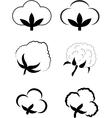 Cotton Gossypium vector image