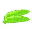 Pods of green peas isolated vector image