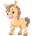 baby horse vector image