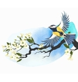 Tomtit and cherry branch vector image