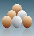 The Eggs vector image