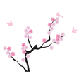 blooming cherry vector image