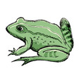 toad amphibian animal vector image