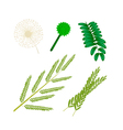Parts of White Popinac on White Background vector image vector image