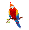 starring parrot vector image