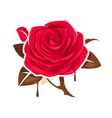rose chocolate leaves vector image