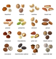 Nuts Flat Icons Set vector image