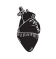 monochrome human heart vector image