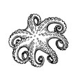 Octopus ink sketch vector image