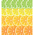 Various Citrus Slices4 vector image