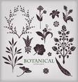 Botanical elements vector image vector image