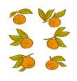 orange hand drawn element tangerine citrus vector image