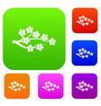 sakura set collection vector image