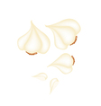 Garlic Bulbs and Garlic Cloves on White Background vector image