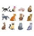 funny and cute cartoon cat different breeds vector image