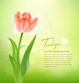 Beautiful tulips on nature Vector Image
