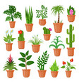 house pot plants vector image