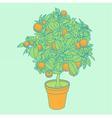 Drawing of a small tangerine tree in a pot vector image
