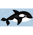 Cartoon killer whale vector image