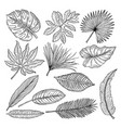 tropical leaves and plants hand drawing vector image