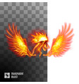 head fiery golden rooster on transparent vector image vector image