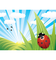 ladybird on the leaf vector image