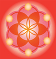 Sacred Geometry red flower vector image vector image
