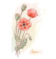 poppy papaver watercolor vector image