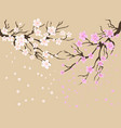 cherry blossoms background vector image